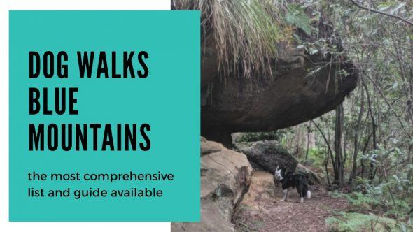 Dog Walks Blue Mountains NSW