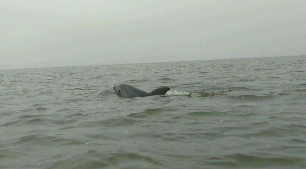Dolphin Lake Wellington Victoria