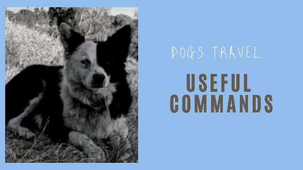 Dogs travel useful commands