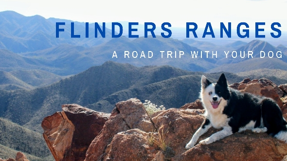 Travel the Flinders Ranges with a dog